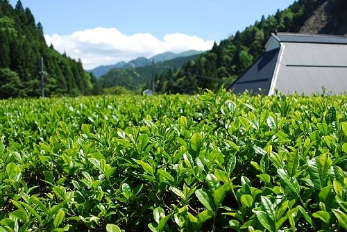「日本茶の 発生」出版記念講演会